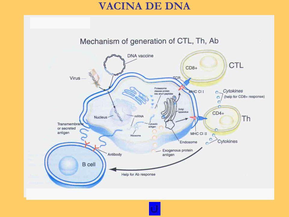 VACINA DE DNA