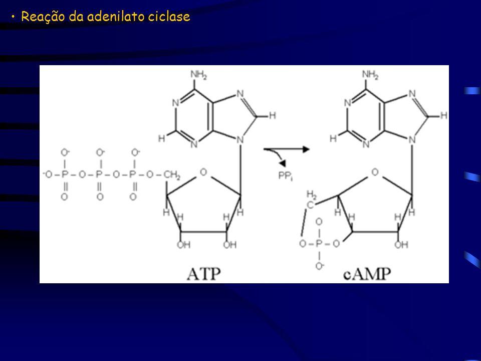 Reação da adenilato ciclase