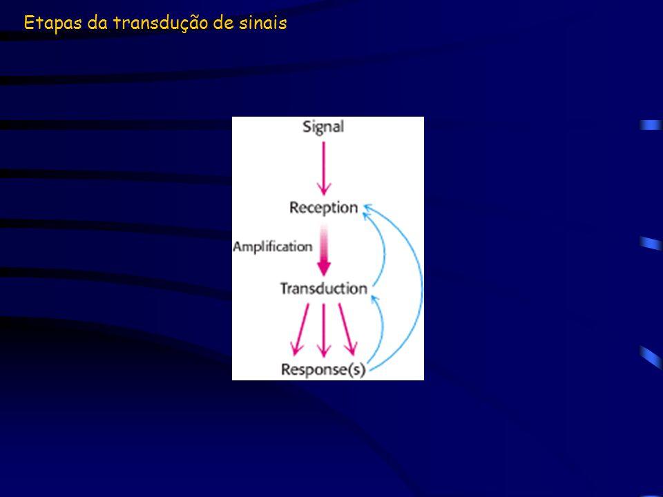 Etapas da transdução de sinais