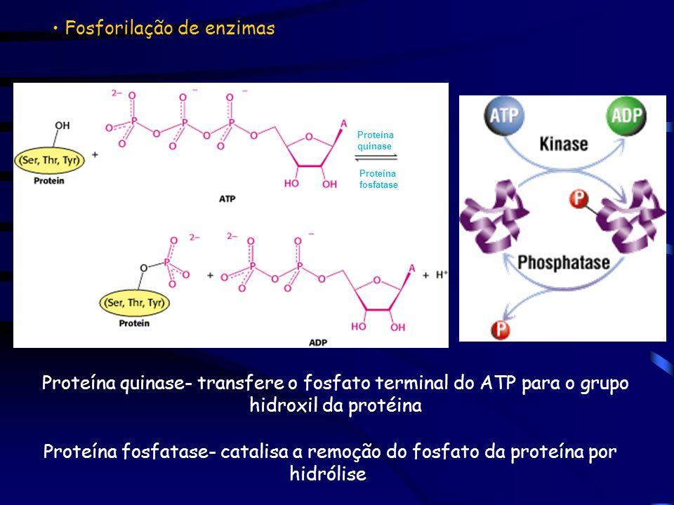 Fosforilação de enzimas