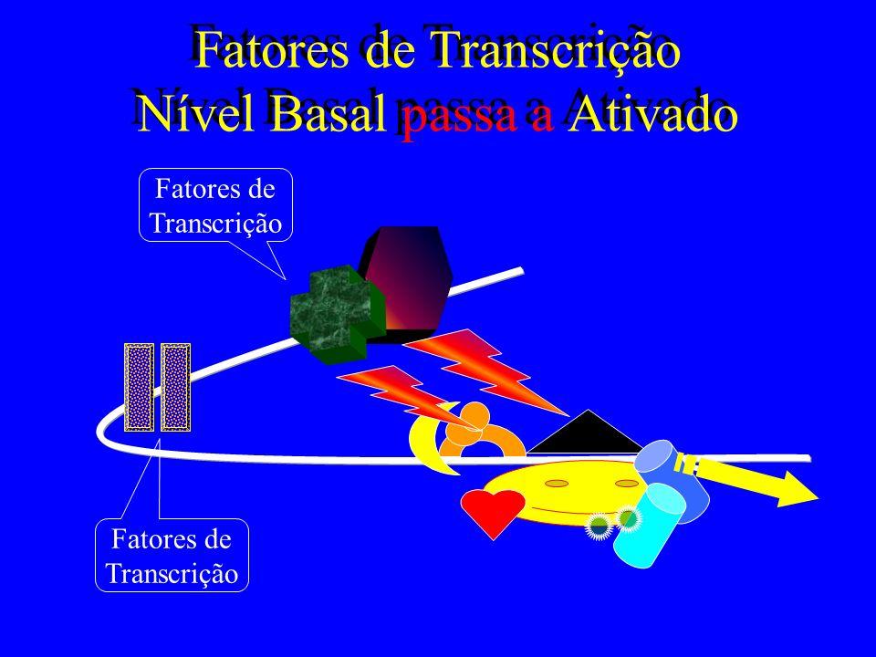 Fatores de Transcrição Nível Basal passa a Ativado