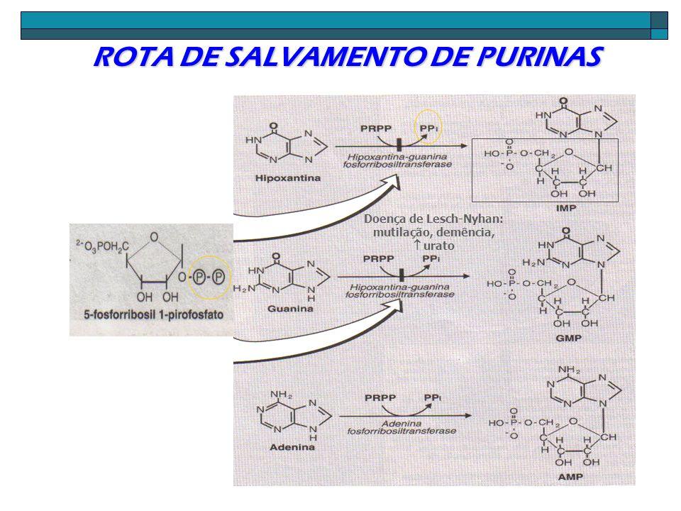 ROTA DE SALVAMENTO DE PURINAS