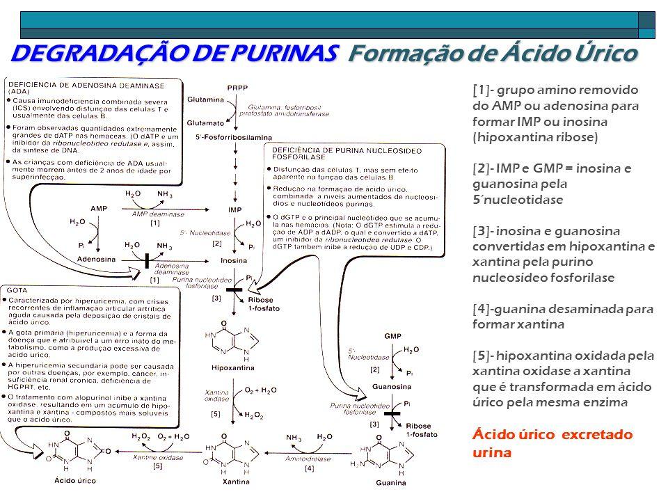 DEGRADAÇÃO DE PURINAS Formação de Ácido Úrico