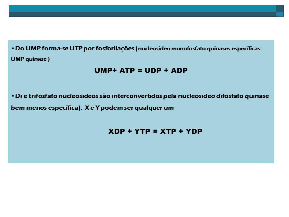 UMP+ ATP = UDP + ADP XDP + YTP = XTP + YDP