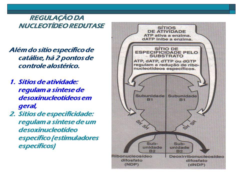 REGULAÇÃO DA NUCLEOTÍDEO REDUTASE
