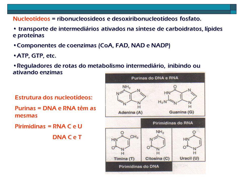 Nucleotídeos = ribonucleosideos e desoxiribonucleotídeos fosfato.