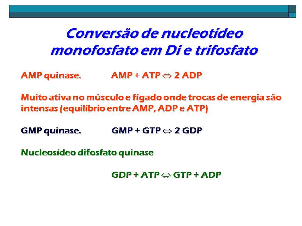 Conversão de nucleotídeo monofosfato em Di e trifosfato