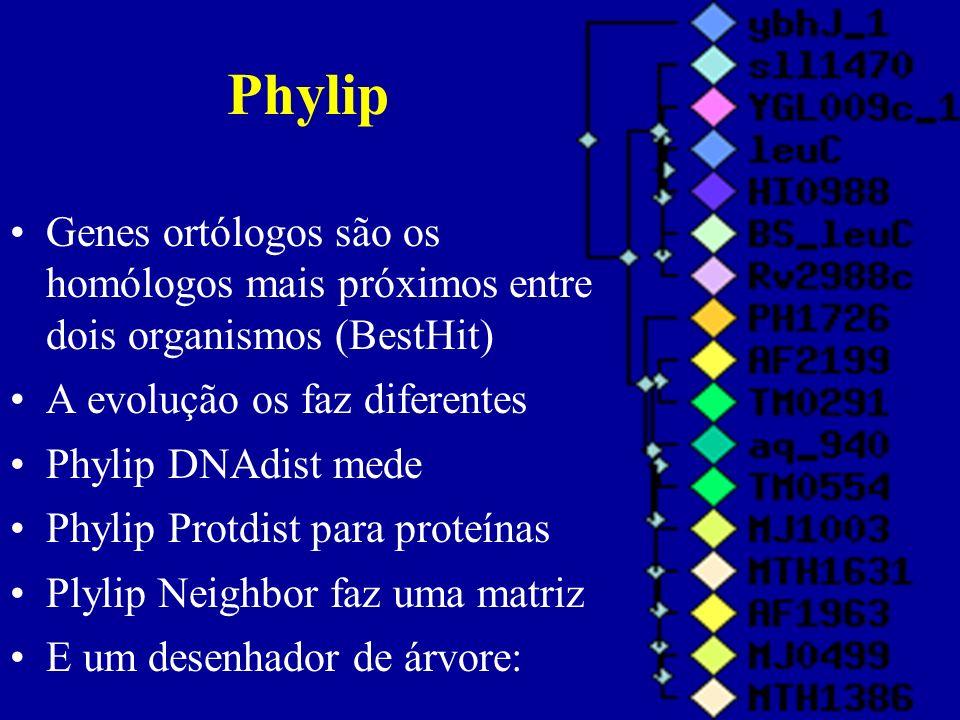Phylip Genes ortólogos são os homólogos mais próximos entre dois organismos (BestHit) A evolução os faz diferentes.
