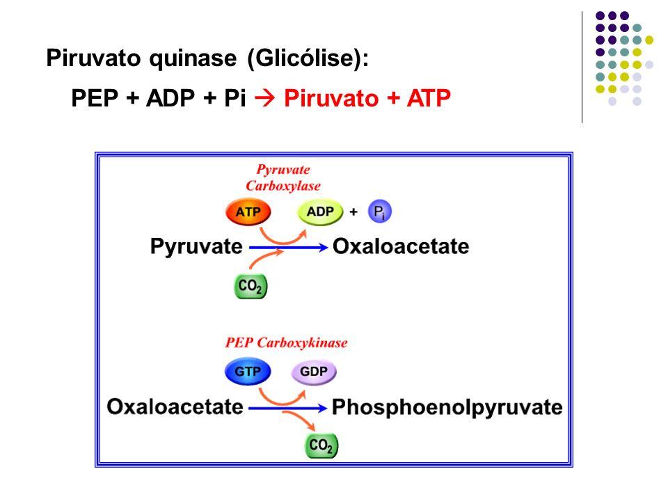 Piruvato quinase (Glicólise):
