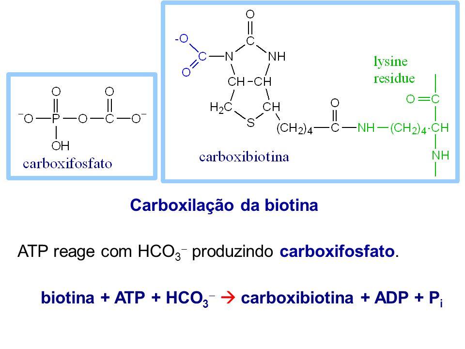 Carboxilação da biotina