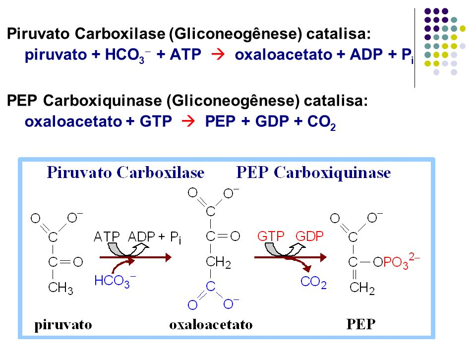 Piruvato Carboxilase (Gliconeogênese) catalisa: