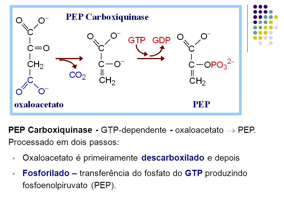 PEP Carboxiquinase - GTP-dependente - oxaloacetato  PEP