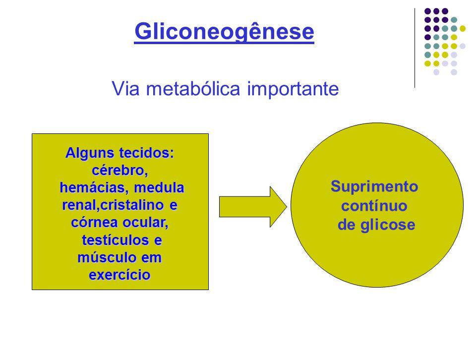Gliconeogênese Via metabólica importante Suprimento contínuo