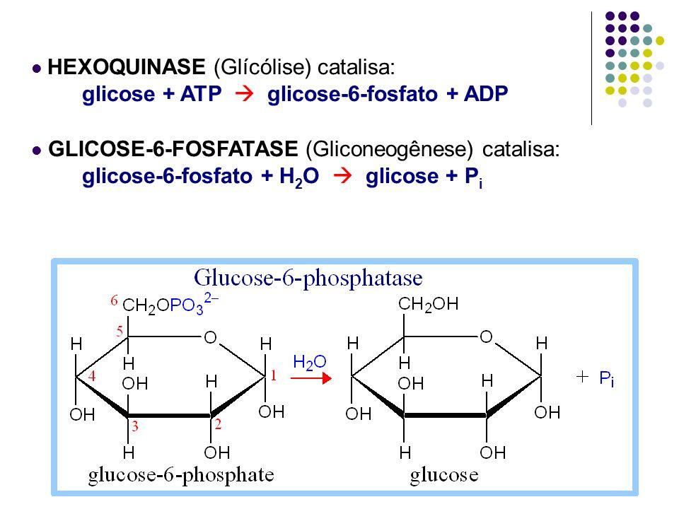 glicose + ATP  glicose-6-fosfato + ADP