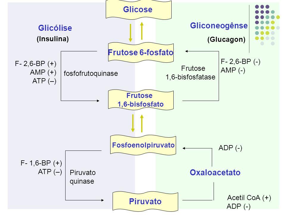 Frutose 6-fosfato Piruvato