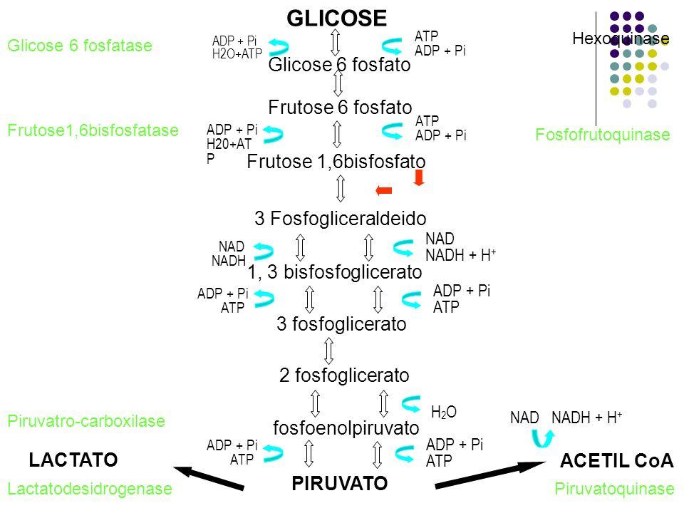 GLICOSE Glicose 6 fosfato Frutose 6 fosfato Frutose 1,6bisfosfato