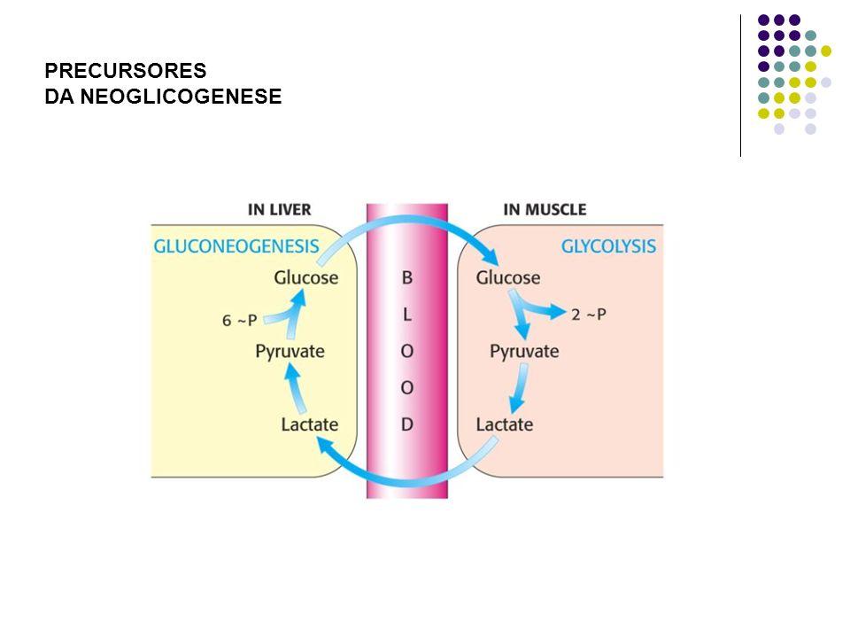 PRECURSORES DA NEOGLICOGENESE