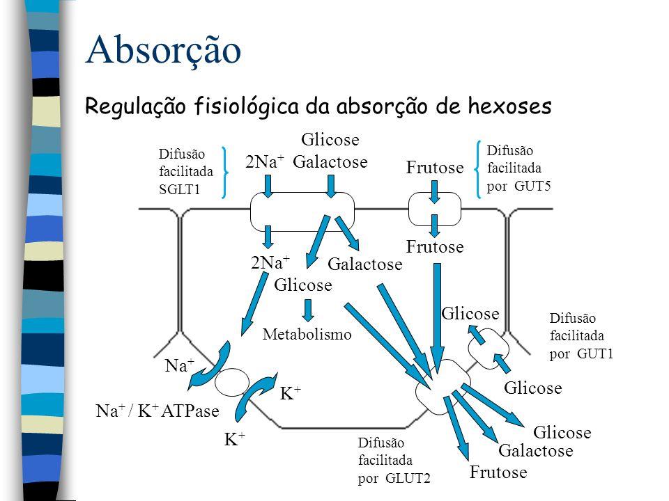 Absorção Regulação fisiológica da absorção de hexoses