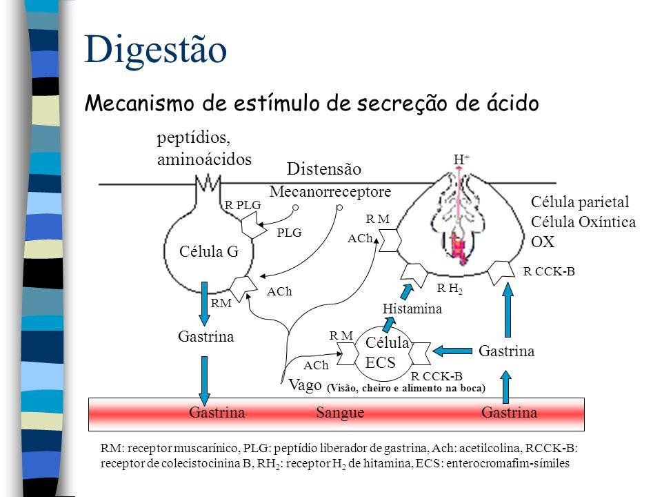 Digestão Mecanismo de estímulo de secreção de ácido