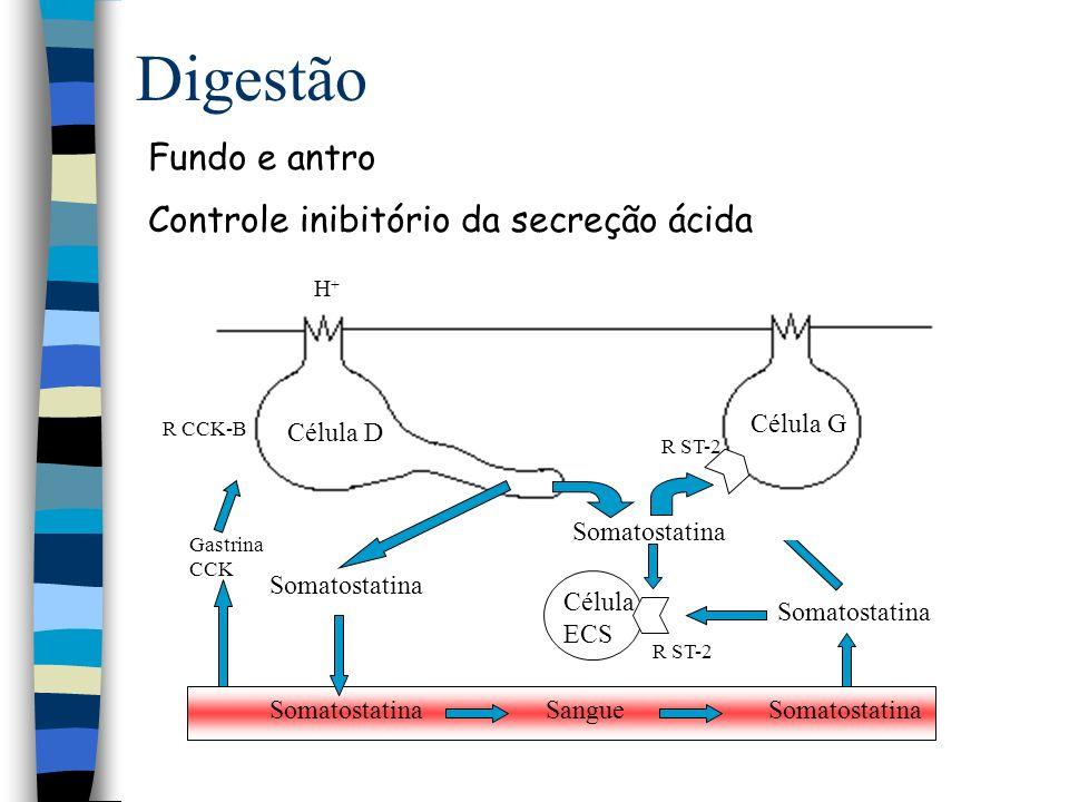 Digestão Fundo e antro Controle inibitório da secreção ácida Célula D