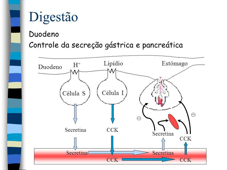 Digestão Duodeno Controle da secreção gástrica e pancreática Célula S
