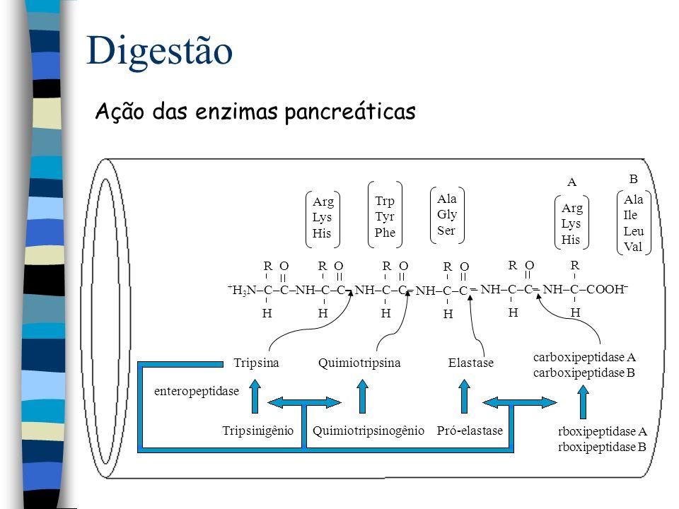 Digestão Ação das enzimas pancreáticas B A Arg Lys His Trp Tyr Phe
