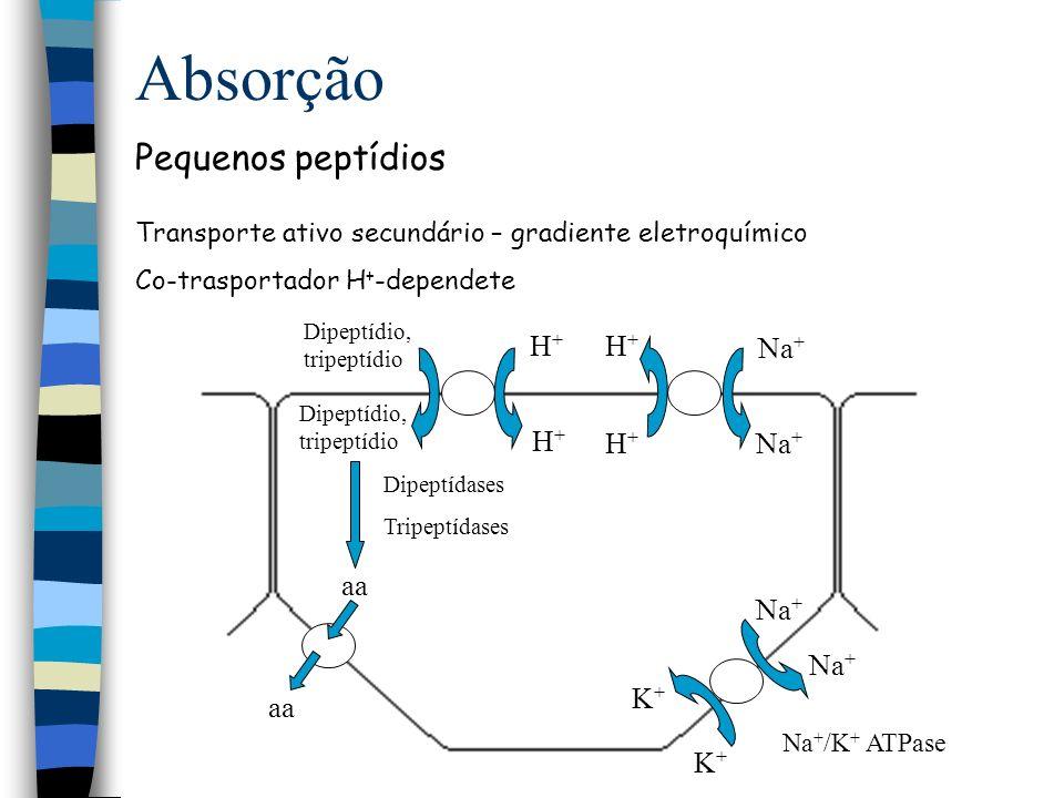 Absorção Pequenos peptídios H+ Na+ aa K+