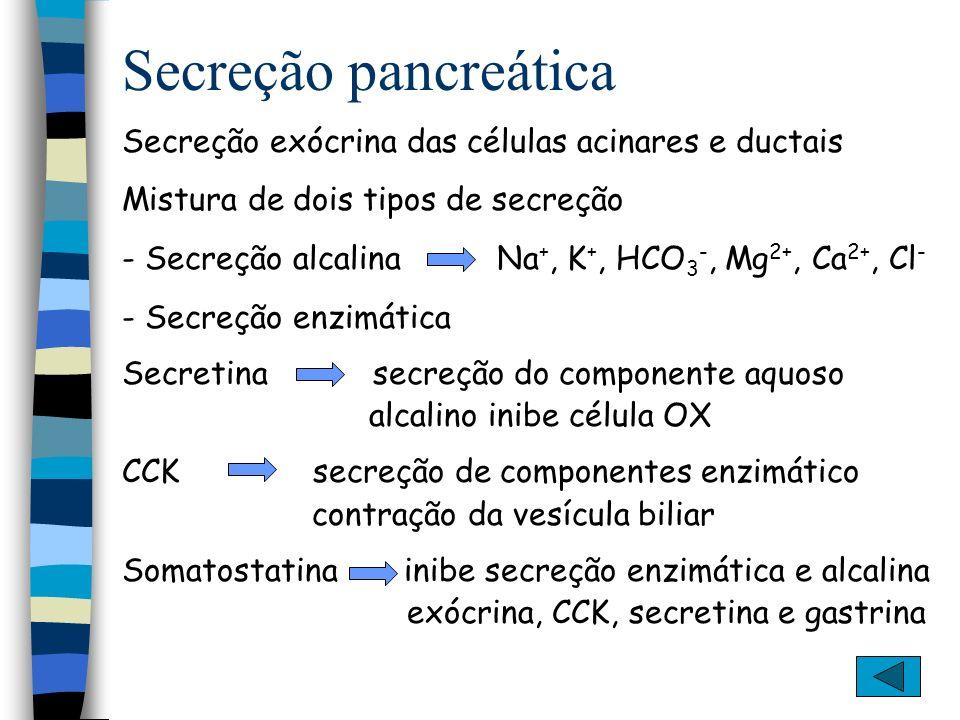 Secreção pancreática Secreção exócrina das células acinares e ductais