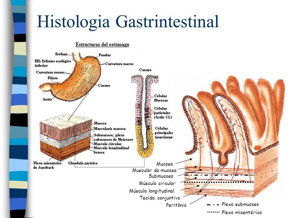 Histologia Gastrintestinal