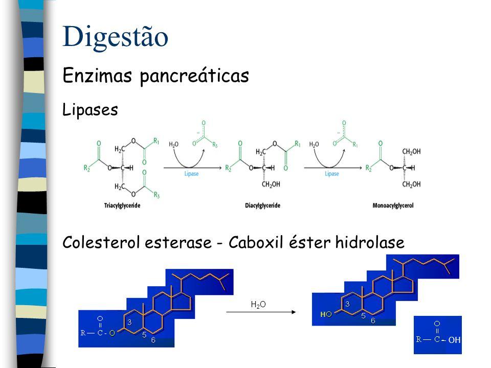 Digestão Enzimas pancreáticas Lipases