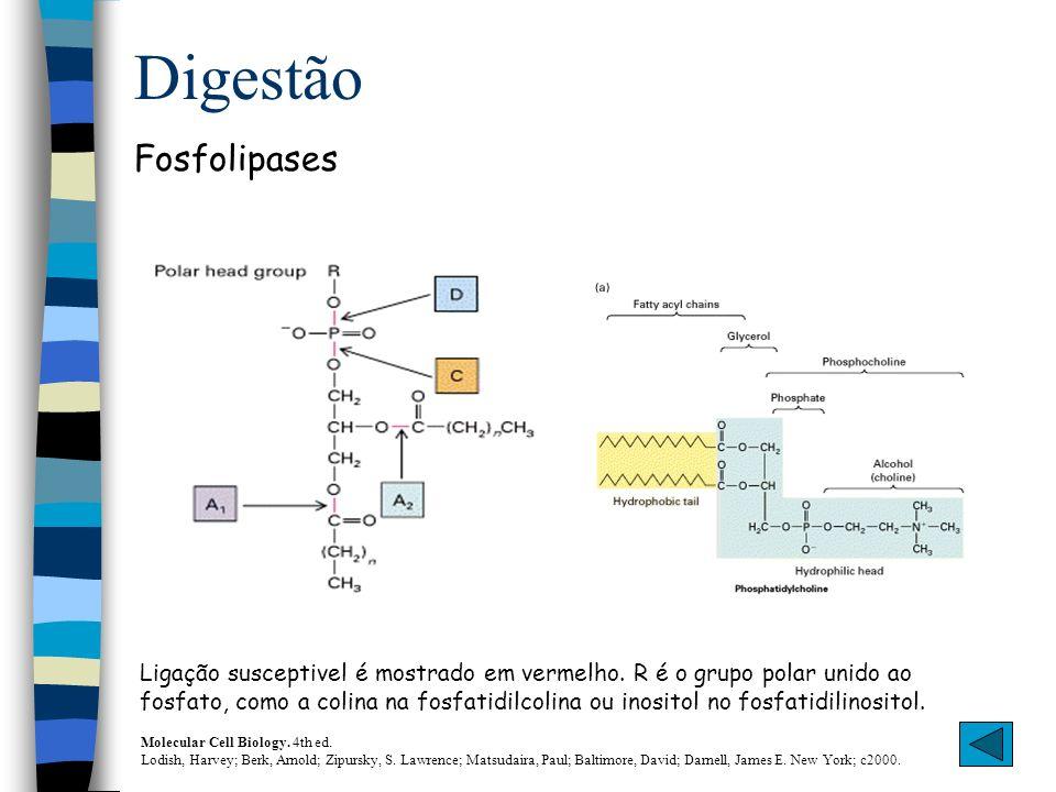 Digestão Fosfolipases