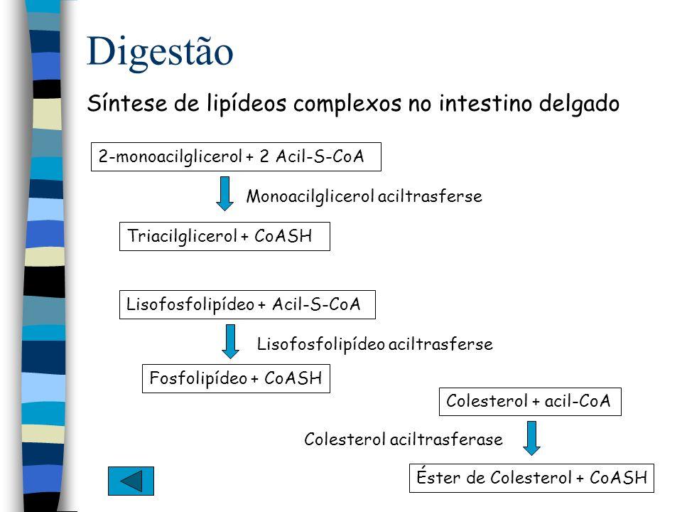 Digestão Síntese de lipídeos complexos no intestino delgado