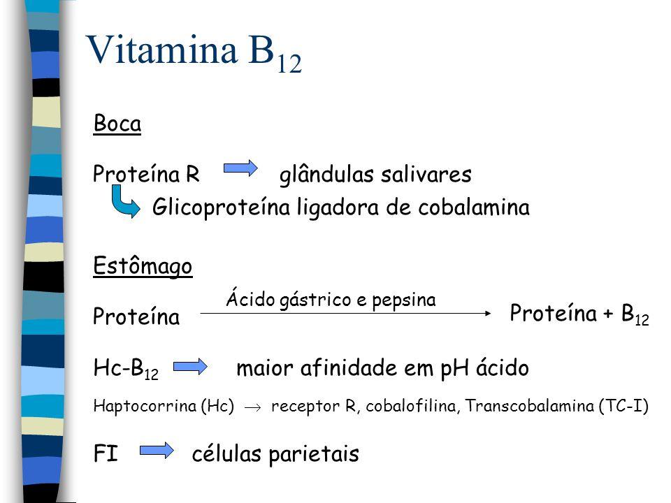 Vitamina B12 Boca Proteína R glândulas salivares Estômago
