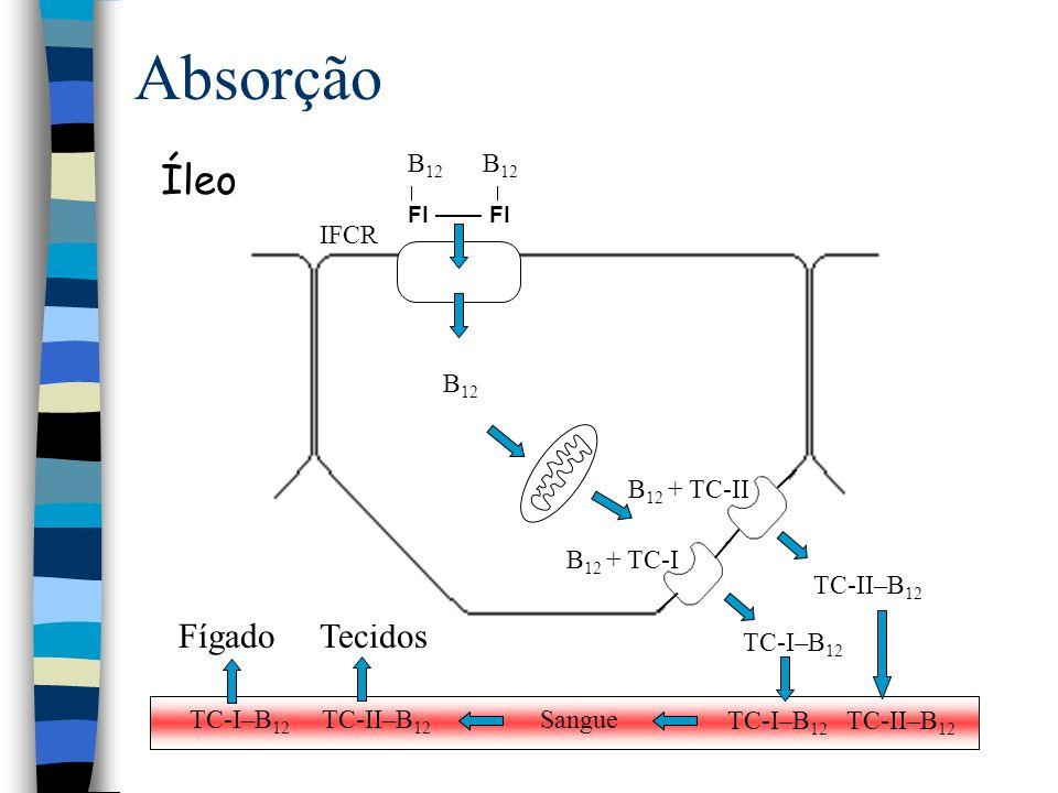 Absorção Íleo Fígado Tecidos B12 B12 B12   FI —— FI IFCR B12 + TC-II