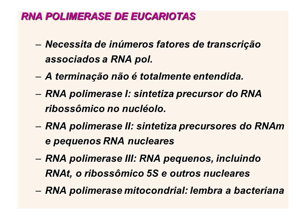 RNA POLIMERASE DE EUCARIOTAS