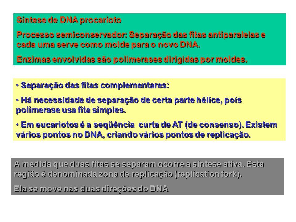 Síntese de DNA procarioto