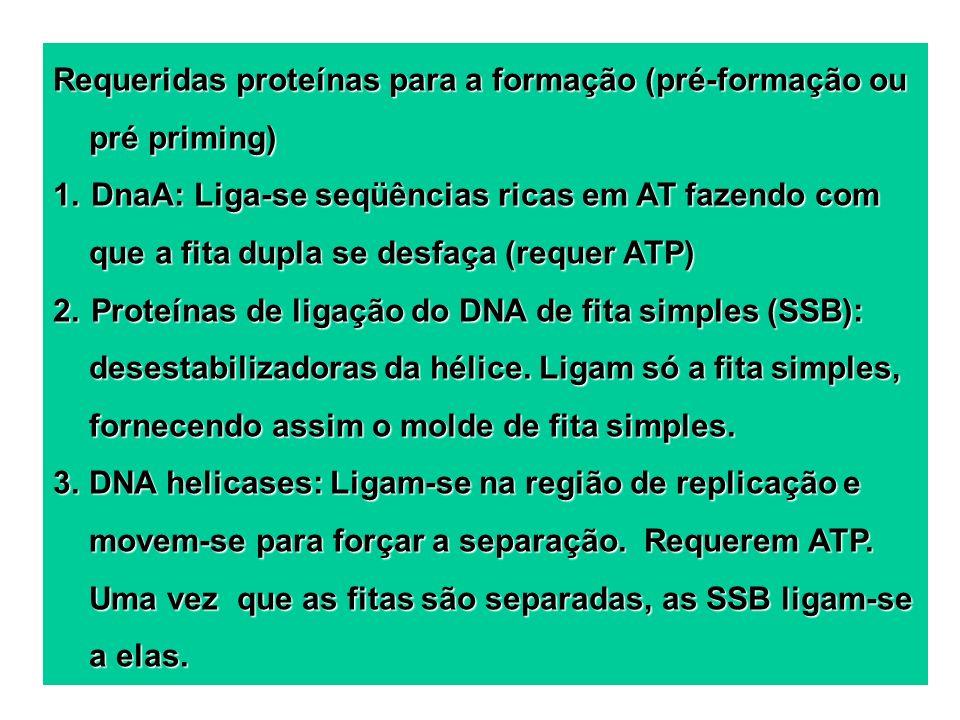Requeridas proteínas para a formação (pré-formação ou pré priming)
