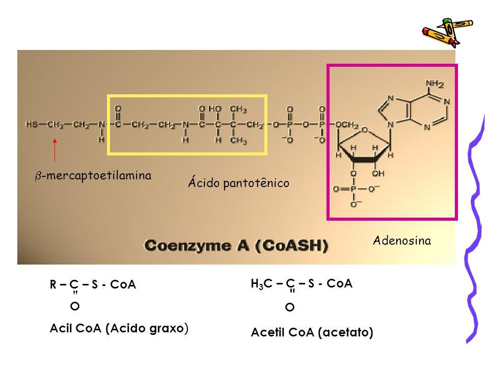 Ácido pantotênico Adenosina. b-mercaptoetilamina. R – C – S - CoA. O. Acil CoA (Acido graxo)