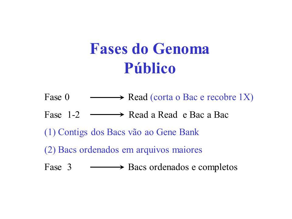 Fases do Genoma Público
