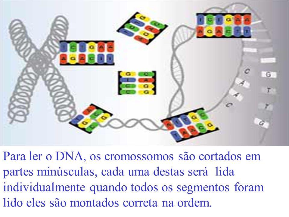 Para ler o DNA, os cromossomos são cortados em partes minúsculas, cada uma destas será lida individualmente quando todos os segmentos foram lido eles são montados correta na ordem.