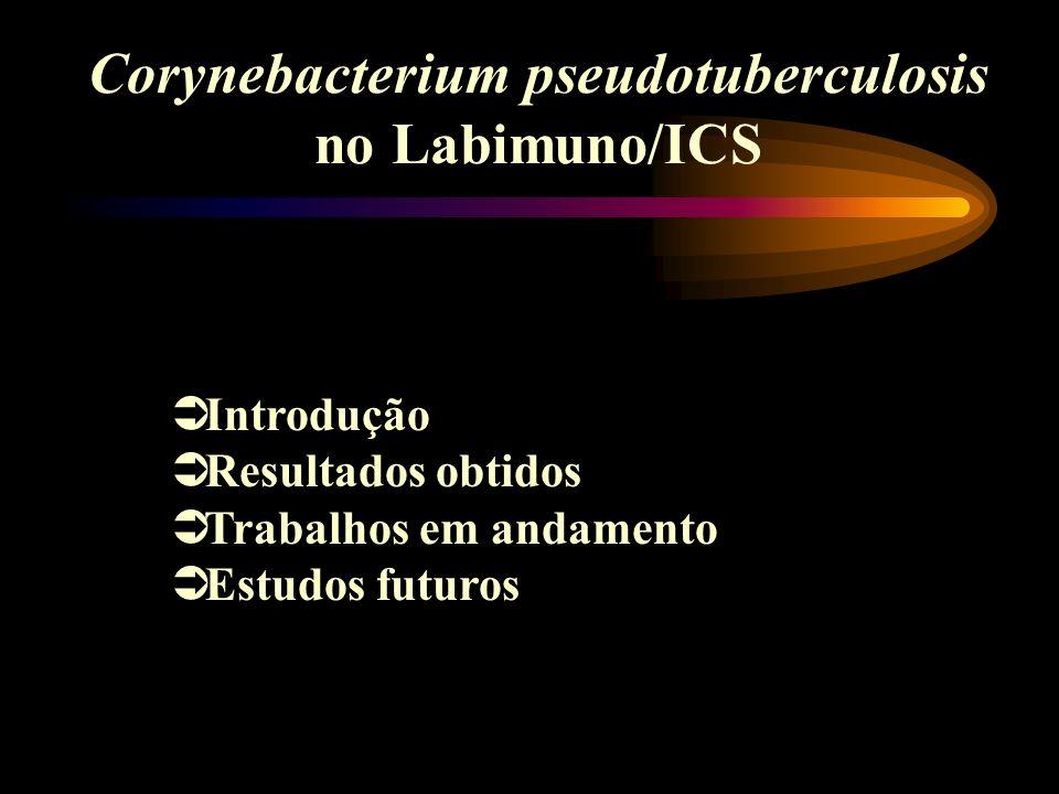 Corynebacterium pseudotuberculosis no Labimuno/ICS