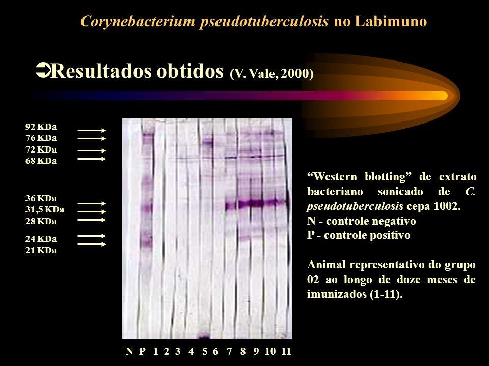 Resultados obtidos (V. Vale, 2000)