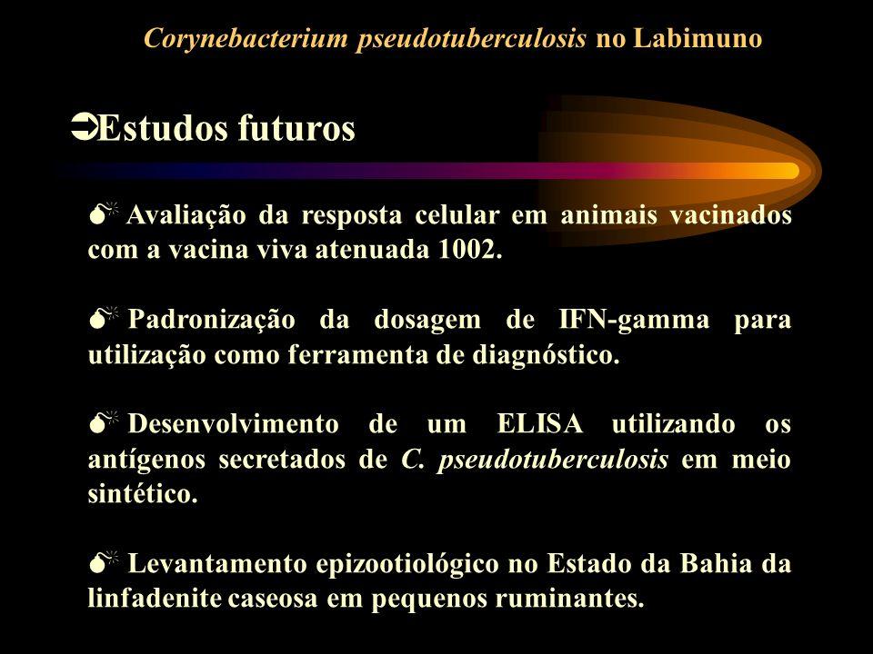 Estudos futuros Corynebacterium pseudotuberculosis no Labimuno