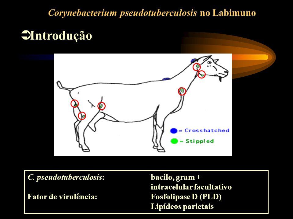 Introdução Corynebacterium pseudotuberculosis no Labimuno