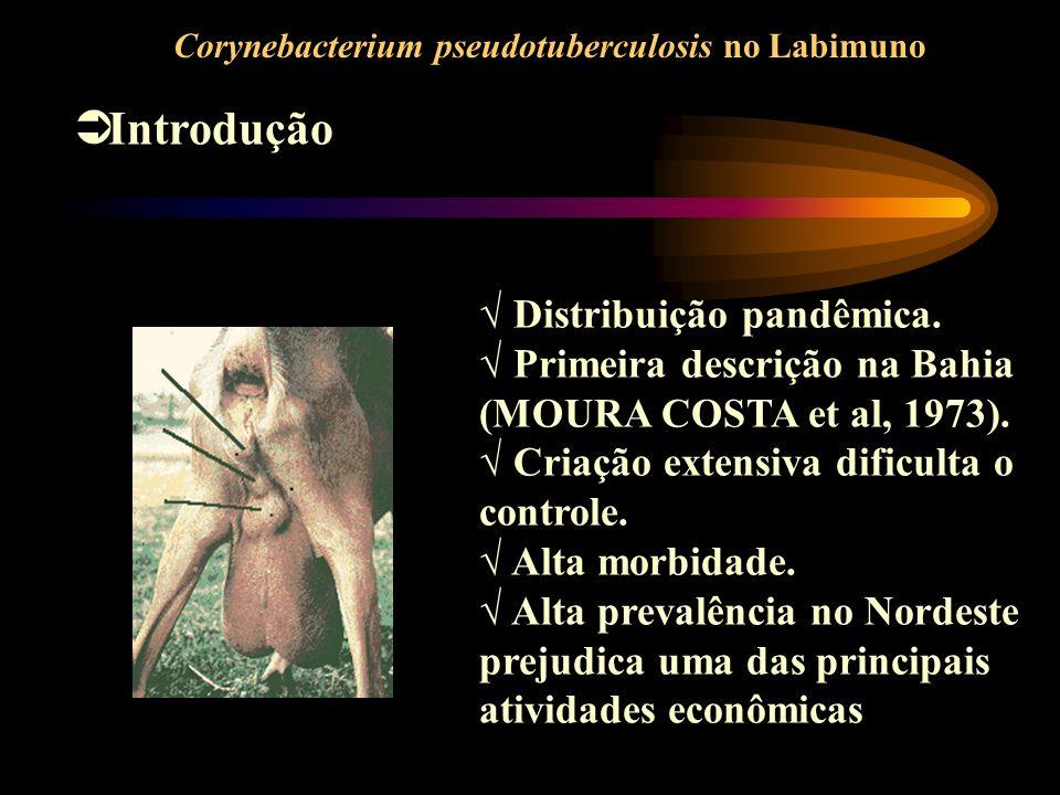 Introdução Distribuição pandêmica.
