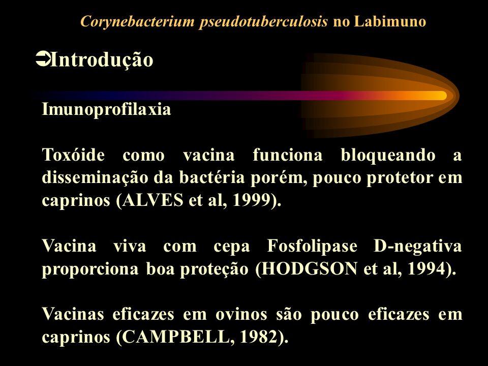 Introdução Imunoprofilaxia