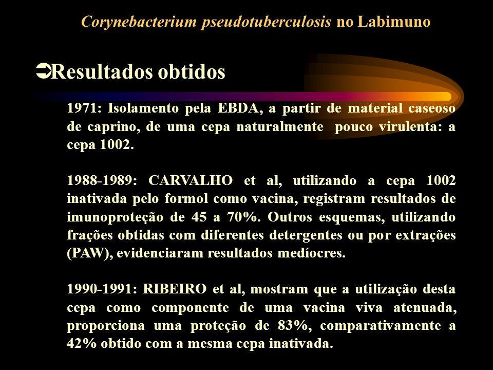 Resultados obtidos Corynebacterium pseudotuberculosis no Labimuno