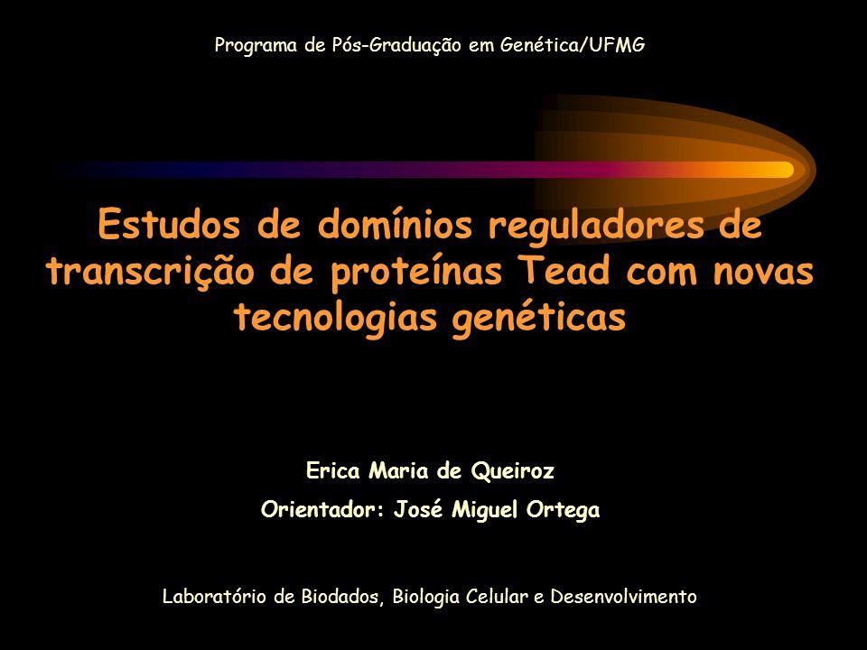 Orientador: José Miguel Ortega