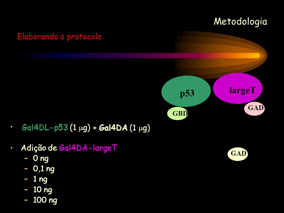 Metodologia largeT p53 Elaborando o protocolo Gal4DL-p53 (1 g)