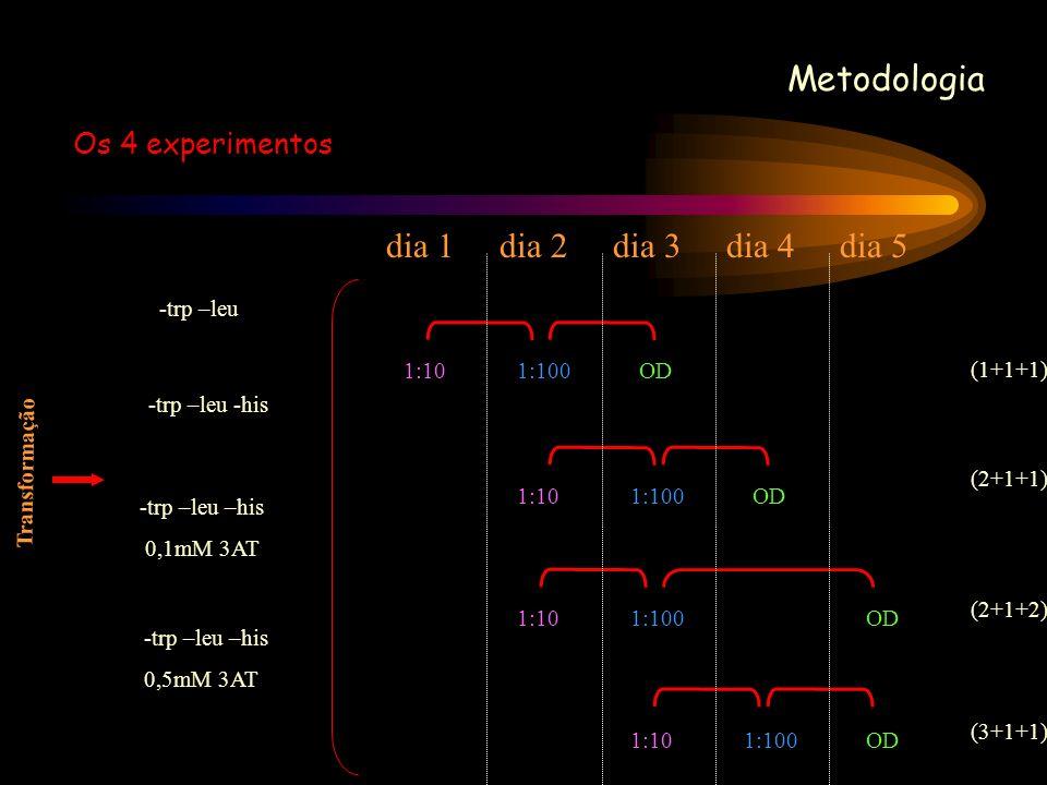 Metodologia Os 4 experimentos dia 1 dia 2 dia 3 dia 4 dia 5 -trp –leu